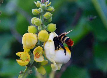 Estudo – Condições de pré-inverno e performance pós-inverno de uma abelha solitária