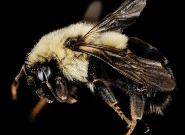 Estudos – A farmácia das abelhas