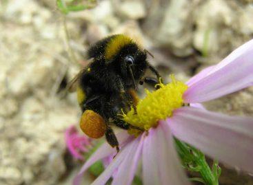 Estudo – Impactos de agrotóxicos nas abelhas: do comportamento dos indivíduos ao serviços de polinização