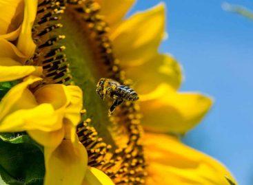 Estudo – Como os insetos manipulam os recursos: implicações em um ambiente de mudanças climáticas