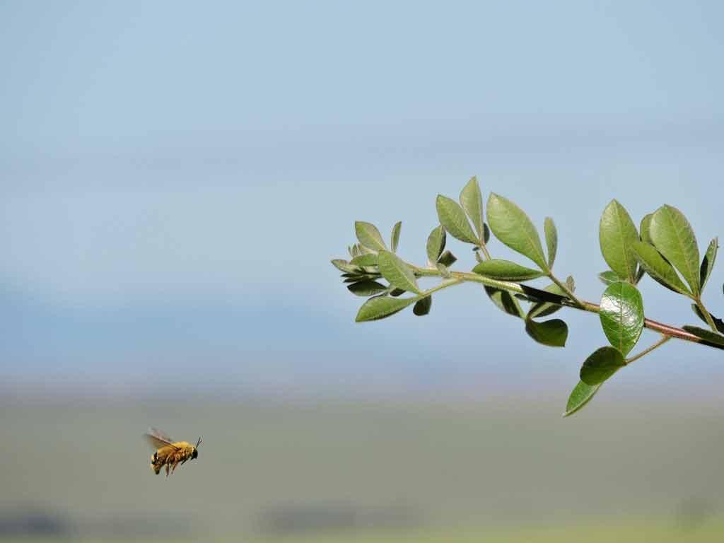 abelha-voo-red