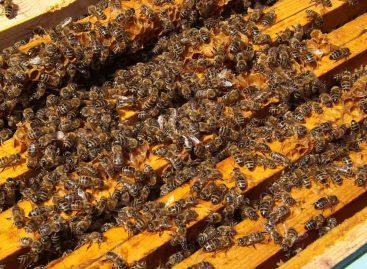 Estudo – Desenvolvimento de um sistema de detecção antecipada para abelhas exóticas e novas pragas