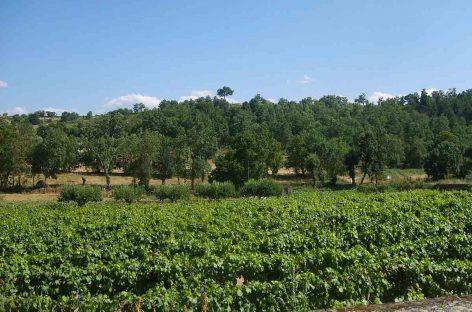 Entrevista – Pesquisador da Embrapa coordena, nesta sexta-feira, simpósio sobre polinização e agricultura
