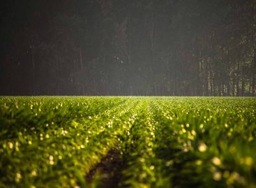 Estudo – Serviços da biodiversidade em agroecossitemas