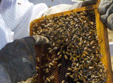 Estudo – Próximos passos: extensão e resolução de problemas com os apicultores