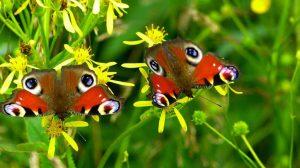 borboletas-2-red
