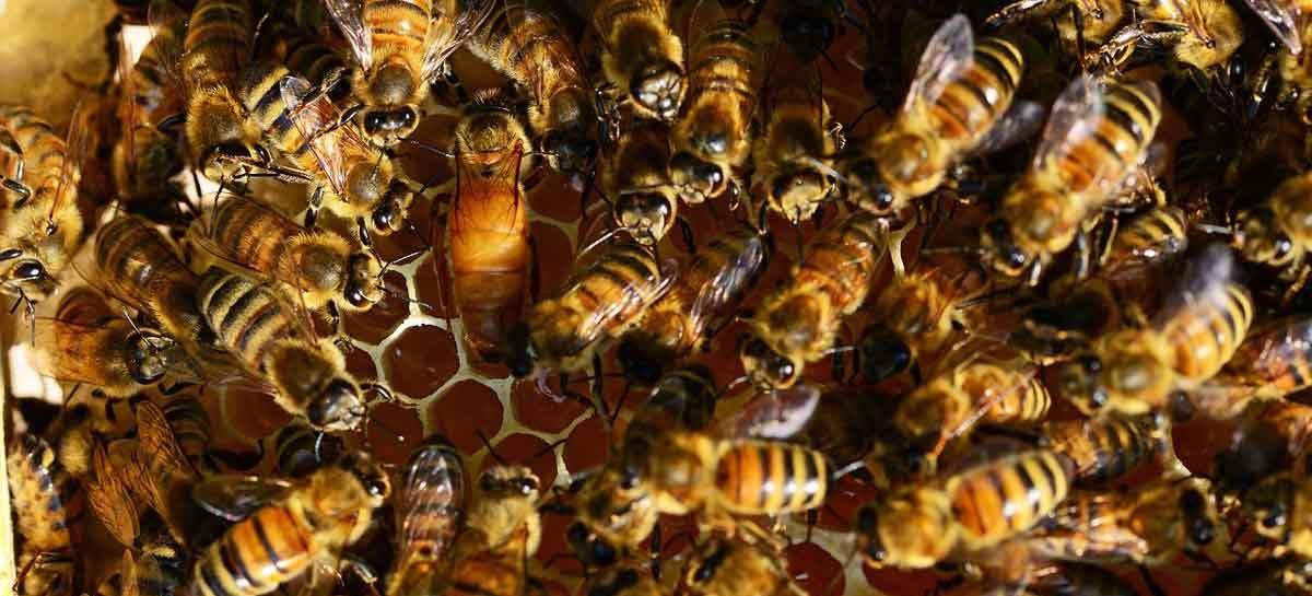 Estudo – O espírito da colmeia: mecanismos da evolução social