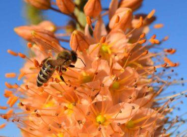 Estudo – Como o pólen afeta o aprendizado das abelhas