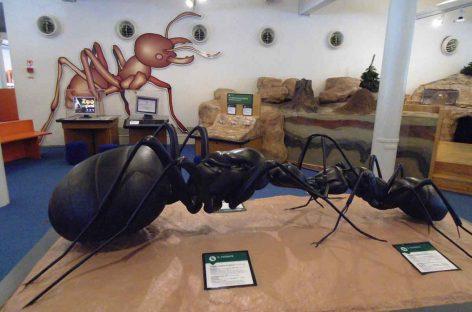 Estudo – Divulgação científica: por que precisamos engajar o público em torno da entomologia