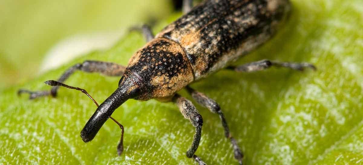Estudo – Nanopartículas de sílica para entrega de RNA em insetos