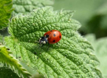 Estudo – Efeito do uso da terra e da diversidade de plantas para a diversidade de insetos