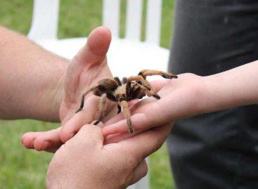 Case – MSU Bug House: De 3 a 93, entomologia para diferentes públicos