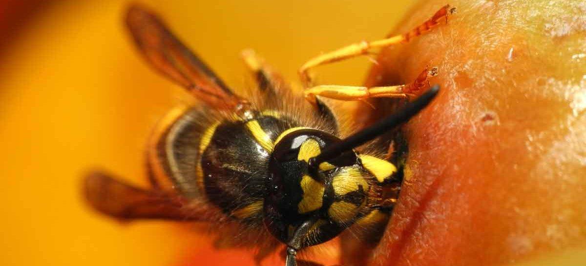 Estudo – Impactos ecológicos de insetos invasores
