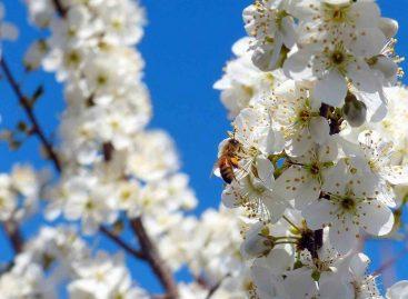 Simpósio trata da interação entre polinizadores e agricultura