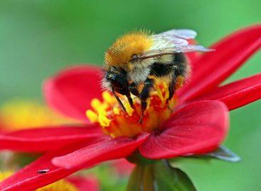 Estudo – Impacto da simplificação e da redução de habitats nos serviços de polinização